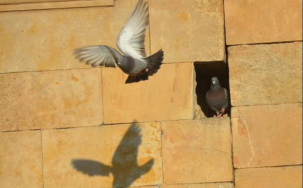 volar hacia un sueño